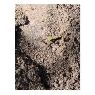 Cartão Postal As formigas vão marchar