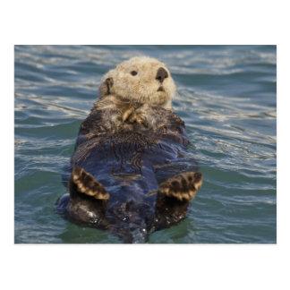 Cartão Postal As lontras de mar jogam em iceberg na entrada da