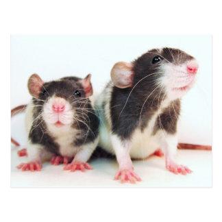 Cartão Postal As mulheres reais possuem ratos!