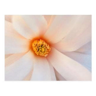 Cartão Postal As pétalas brancas bonitas da flor da magnólia