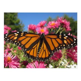 Cartão Postal Asas do monarca - borboleta