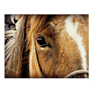 Cartão Postal Ascendente próximo do cavalo