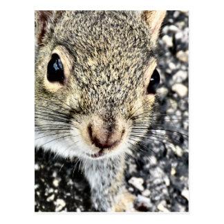 Cartão Postal Ascendente próximo do esquilo!