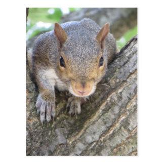 Cartão Postal Ascendente próximo do esquilo