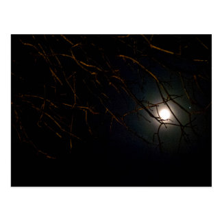 Cartão Postal Ascensão da Lua cheia atrás da árvore