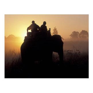 Cartão Postal Ásia, India, Kanha NP, safari do elefante