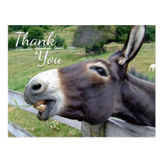 """Cartão Postal Asno """"obrigado você"""" cumprimento irrisório"""