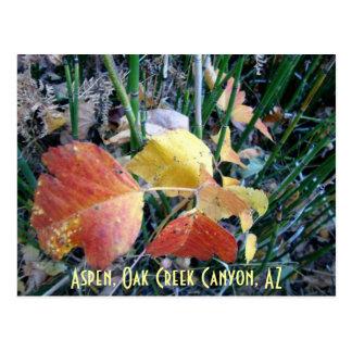 Cartão Postal Aspen, garganta da angra do carvalho, AZ