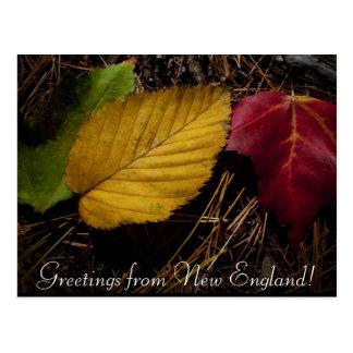 Cartão Postal assoalho da floresta do folhagem de outono