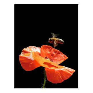 Cartão Postal Assomo em flor de papoila