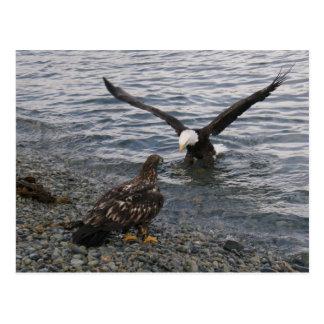 Cartão Postal Aterragem da águia americana na praia