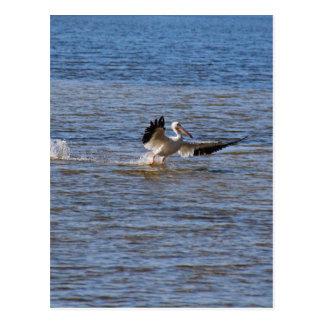 Cartão Postal Aterragem do pelicano