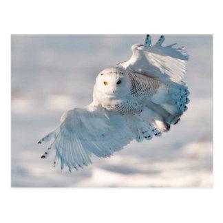Cartão Postal Aterragem nevado da coruja na neve
