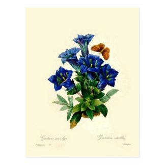 Cartão Postal Aucalis Gentiana