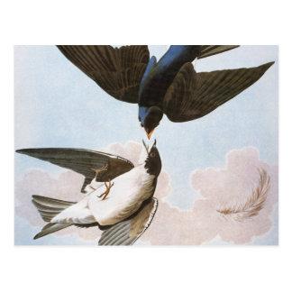 Cartão Postal Audubon: Andorinha de árvore