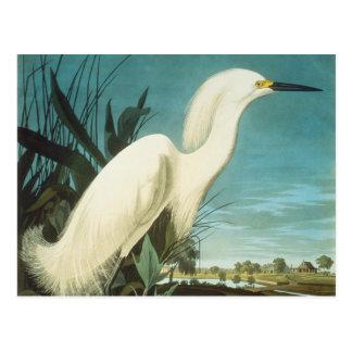 Cartão Postal Audubon: Egret
