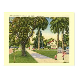 Cartão Postal Avenida alaranjada do bosque., vintage de
