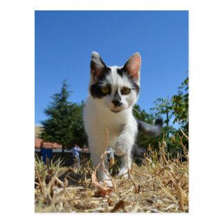 Cartão Postal Aventura do gato do gatinho