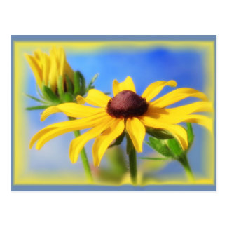 Cartão Postal Azuis do Rudbeckia - vinheta