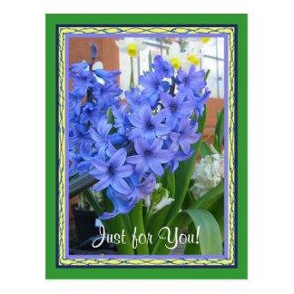 Cartão Postal Azul do jacinto
