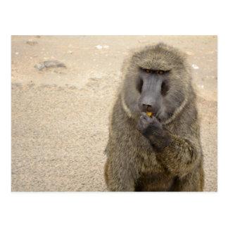 Cartão Postal babuíno no arbusto africano