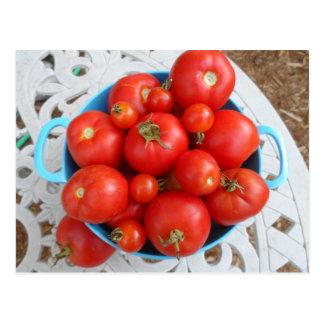 Cartão Postal Bacia de tomates