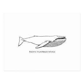 Cartão Postal Baleia de Humpback pacífica