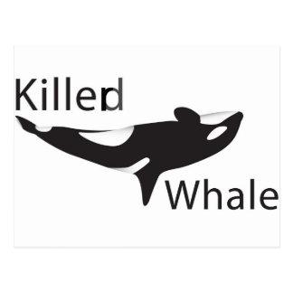 Cartão Postal Baleia de Killerd