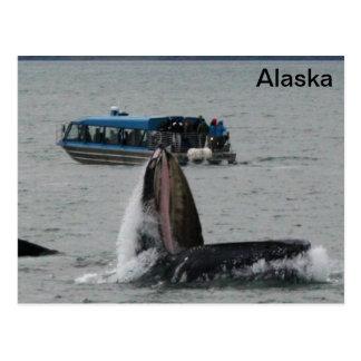 Cartão Postal Baleias de Alaska