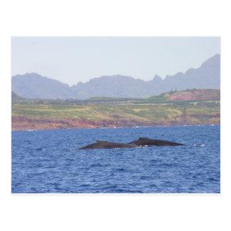 Cartão Postal Baleias de Humpback havaianas