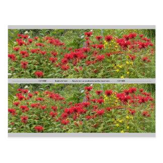 Cartão Postal Bálsamo de abelha e marcador do Milkweed 2