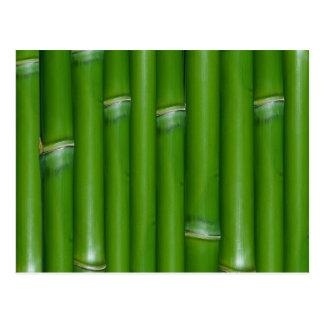 Cartão Postal Bambu verde