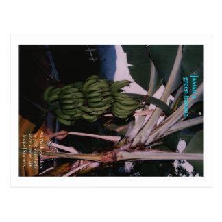 Cartão Postal Banana verde Jamaica