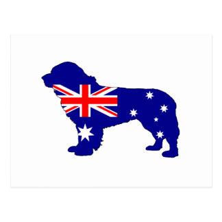Cartão Postal Bandeira australiana - cão de Terra Nova
