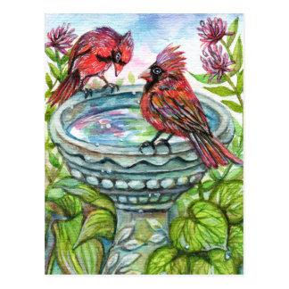 Cartão Postal Banho do pássaro