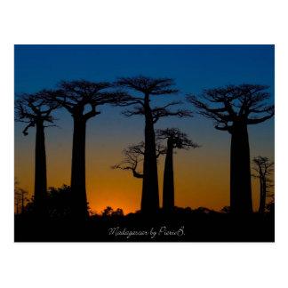 Cartão Postal Baobabs da Madagáscar