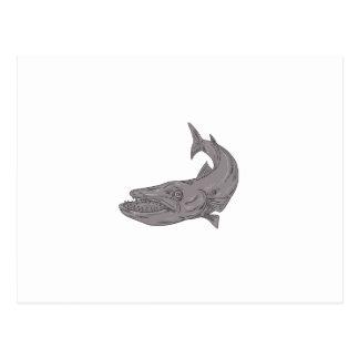 Cartão Postal Barracuda que nada abaixo do desenho