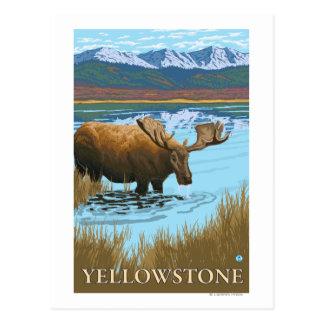Cartão Postal Bebendo dos alces nacional no lago - Yellowstone