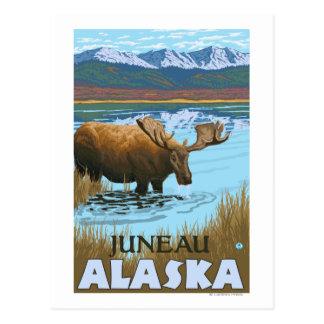 Cartão Postal Bebendo dos alces no lago - Juneau, Alaska