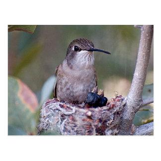 Cartão Postal Bebês 2 do colibri