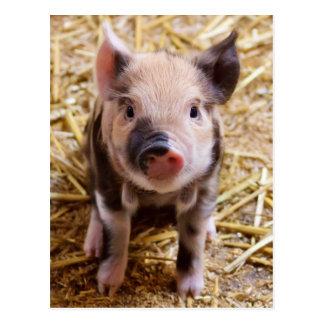 Cartão Postal Bebês bonitos do Barnyard dos animais de fazenda