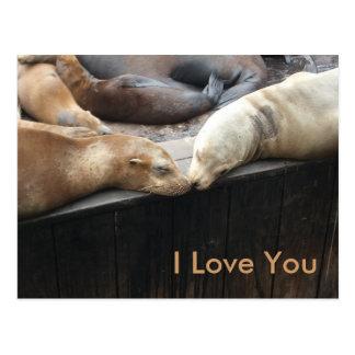 Cartão Postal Beijado leões marinhos