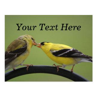 Cartão Postal Beijando Goldfinches