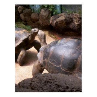 Cartão Postal Beijo gigante da tartaruga