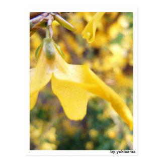 Cartão postal - Belbe flor