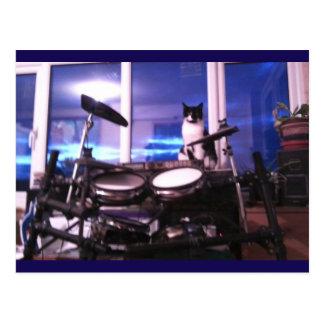 Cartão Postal Beleza do animal do gato do baterista dos azuis do