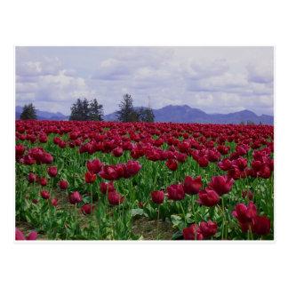 Cartão Postal Beleza do vale de Skagit