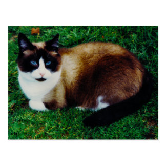 Cartão Postal Beleza felino