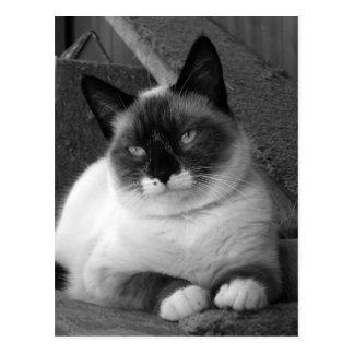 Cartão Postal Beleza (preto & branco)