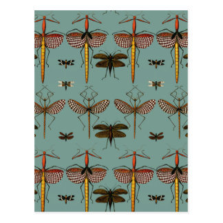 Cartão Postal Bengalas, Katydids e libélulas